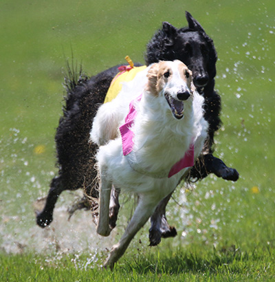 Coursing on a wet field