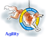 A Borzoi on the Agility A-frame