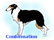 A Borzoi in conformation
