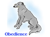 A Borzoi in obedience
